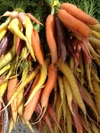 tri-color carrots